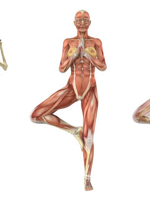 anatomia-del-yoga-1024x662